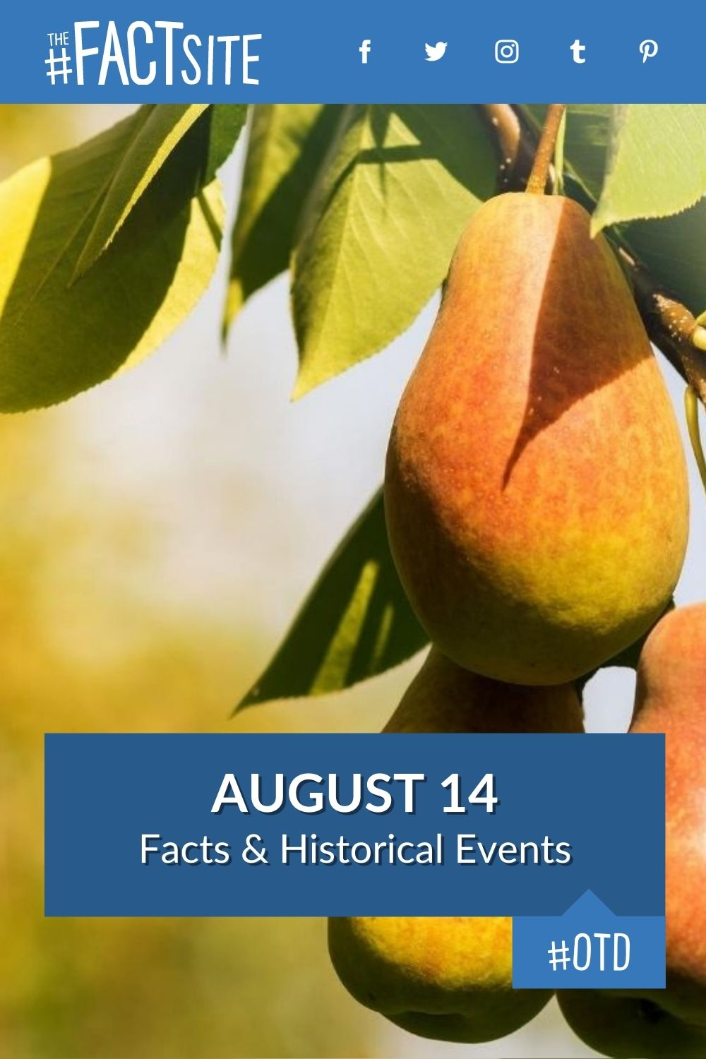 Facts & Historic Events That Happened on August 14