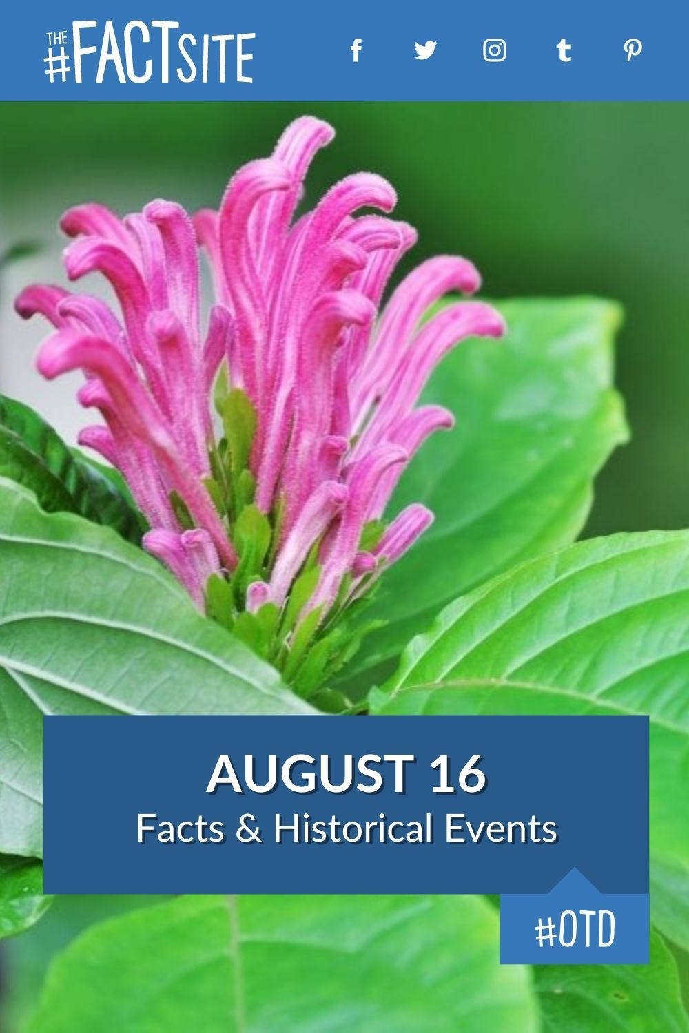 Facts & Historic Events That Happened on August 16