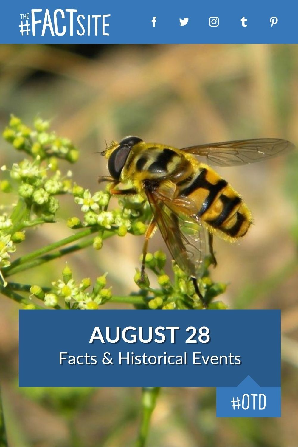Facts & Historic Events That Happened on August 28