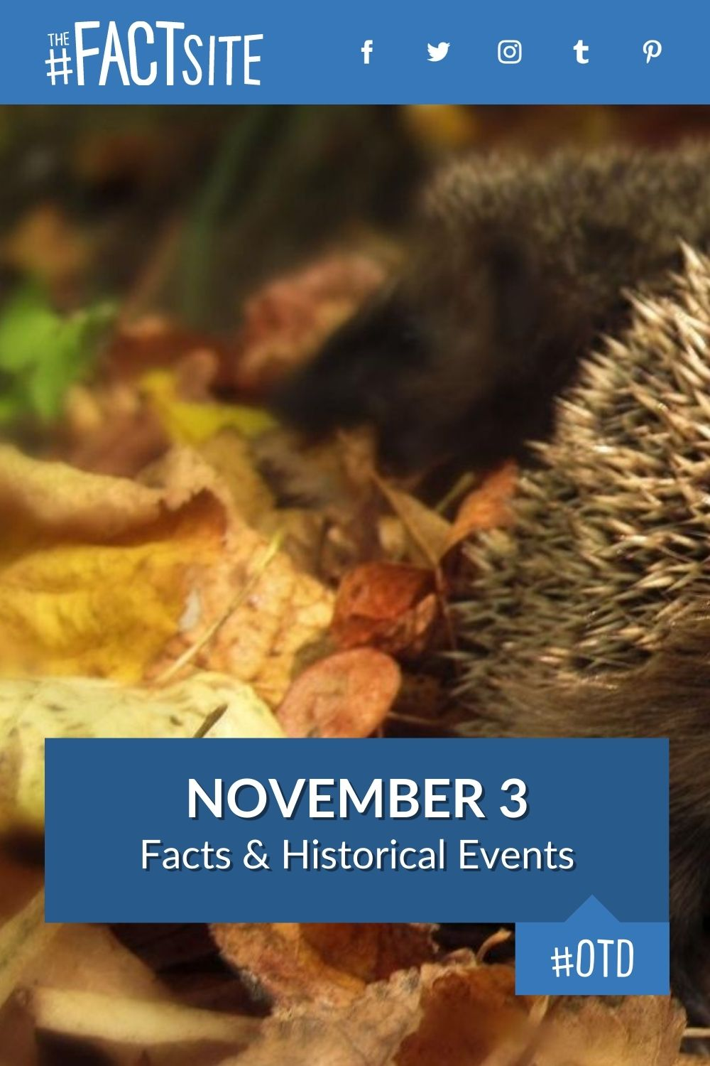 Facts & Historic Events That Happened on November 3