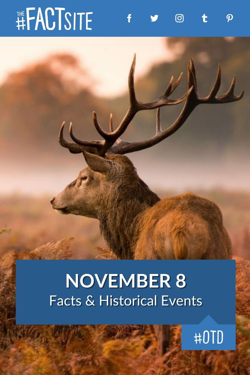 Facts & Historic Events That Happened on November 8