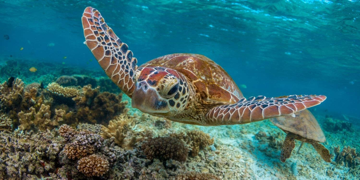 Facts all about sea turtles