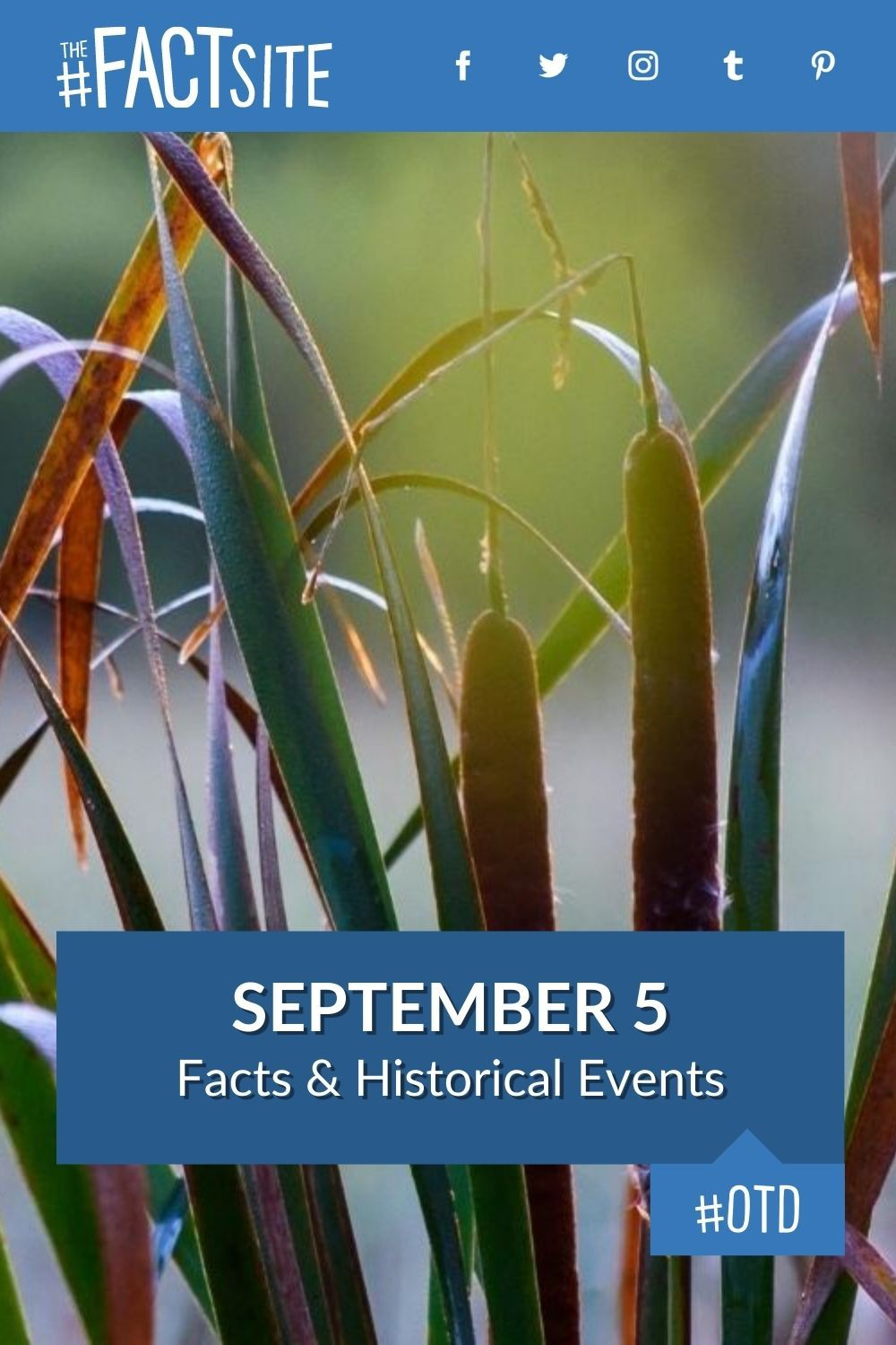 Facts & Historic Events That Happened on September 5