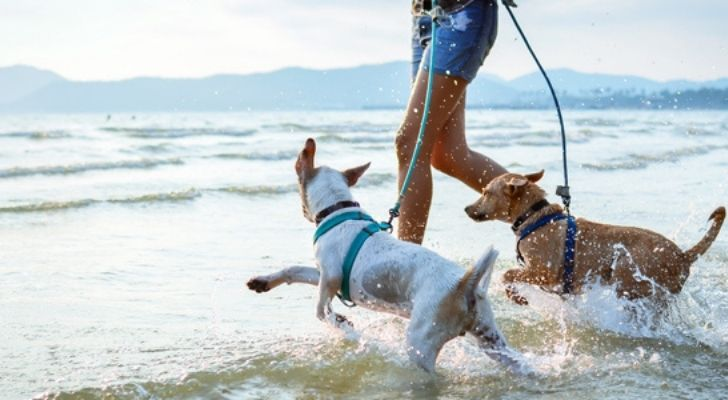 Someone walking dogs at the beach
