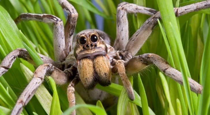 A spider with big legs and eyes