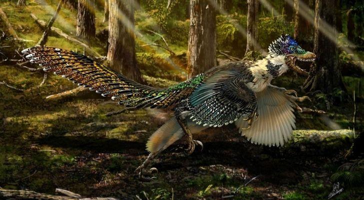 A feathery velociraptor