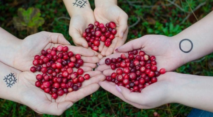 Three people holding cranberries in their hands