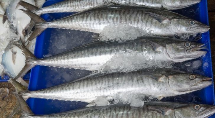Five King mackerel fish on ice
