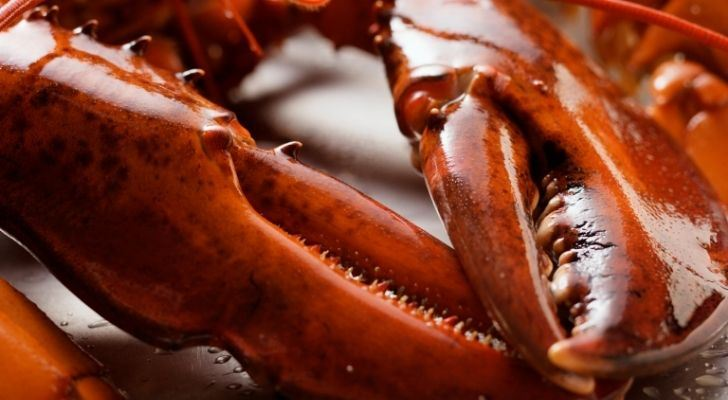 A closeup of lobster claws