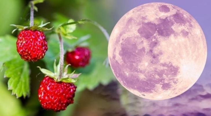 A pink colored moon on the right with strawberries on the left