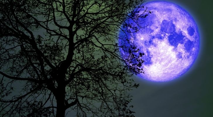 Buck moon behind a tree