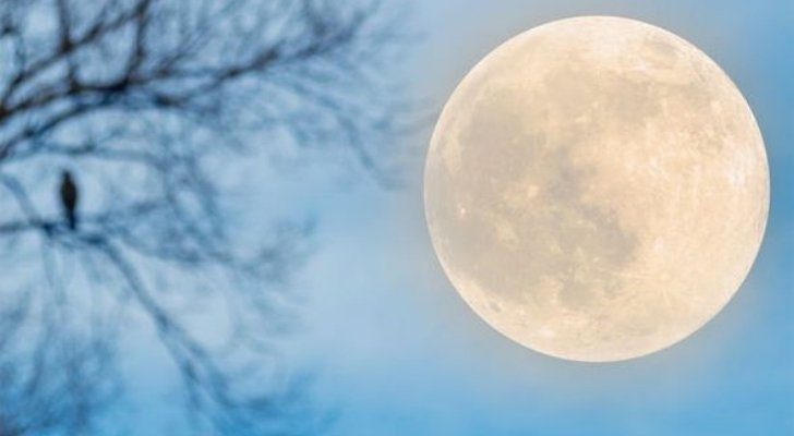 The Harvest Moon and a tree with no leafs on it